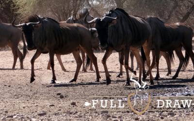 7 Day Bushveld Hunting Trip