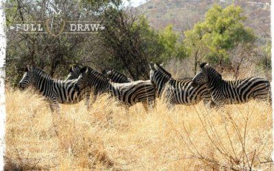 8 Day Bushveld Hunting Trip